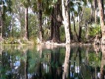Réflexion d'arbres, australie Photographie stock libre de droits