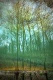 Réflexion d'arbres dans le lac Photos libres de droits