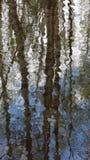 Réflexion d'arbres de bouleau en eaux courantes Photos stock