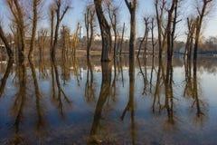Réflexion d'arbres sur l'eau. Images libres de droits
