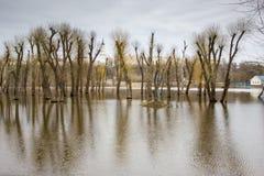 Réflexion d'arbres sur l'eau. Image stock