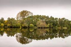 Réflexion d'Autumn Trees Images libres de droits