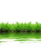 réflexion d'herbe images libres de droits