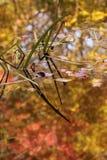 Réflexion d'herbe dans l'étang Images stock
