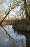 Réflexion d'un arbre dans l'eau près d'un barrage de castor Images stock