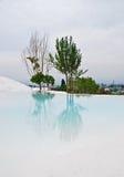 Réflexion d'un arbre dans un lac blanc image libre de droits
