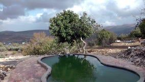 Réflexion d'un arbre dans une vieille piscine banque de vidéos