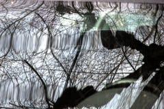 Réflexion d'un arbre dans un verre de voiture photo libre de droits
