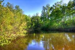 Réflexion d'un lac Photo libre de droits