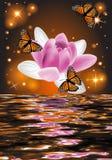 Réflexion d'une belle fleur de lotus avec des papillons Images stock