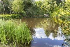 Réflexion d'une forêt verte et d'un ciel bleu sur le rivage d'un étang de forêt pendant l'été Photos libres de droits
