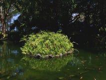 Réflexion d'usine sur le petit lac dans le jardin de parc photographie stock libre de droits