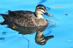 Réflexion dans l'eau bleue Photographie stock