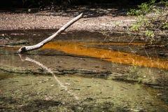 Réflexion dans le lac Images libres de droits