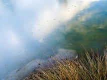 Réflexion dans le lac Photo libre de droits