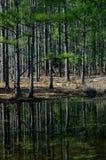 Réflexion dans le marais des arbres Photo libre de droits