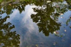Réflexion dans Puddlie Images stock