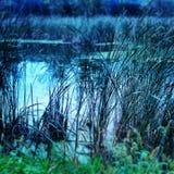 Réflexion de fil Image stock