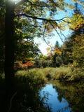 Réflexion de fleuve d'orignaux Photos stock