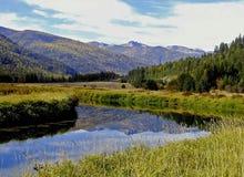 Réflexion de fleuve de Bull Photo stock