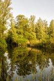 Réflexion de forêt Photo stock