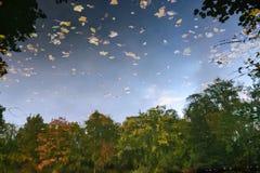 Réflexion de forêt Image libre de droits