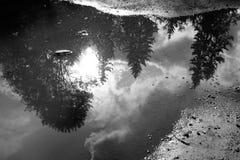 Réflexion de forêt dans l'eau Images libres de droits