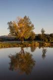 Réflexion de l'arbre sur l'étang Photo stock