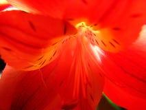 Réflexion de la lumière Photographie stock
