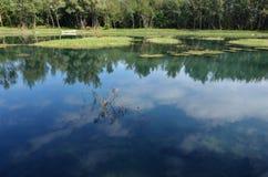 Réflexion de lac Image libre de droits