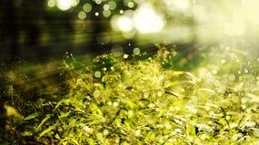 Réflexion de lumière du soleil Photos stock