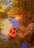 Réflexion de magma Photos libres de droits