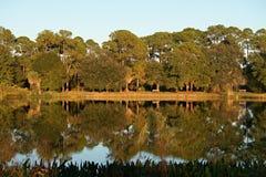 Réflexion de nature au-dessus de l'eau Photographie stock libre de droits
