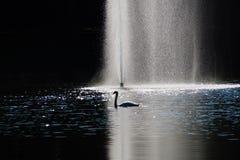 réflexion de nature de cygne de lac d'automne Images libres de droits