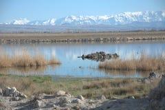 Réflexion de neige vers le lac Photos libres de droits