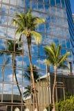 Réflexion de palmier Photo libre de droits