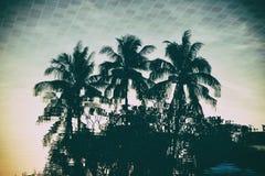 Réflexion de palmier de silhouette dans la piscine avec le fond de filtre de vintage Photo libre de droits