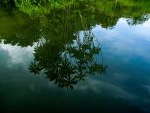 Réflexion de palmier sur la rivière Image libre de droits
