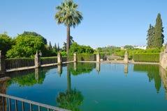 Réflexion de paume dans l'étang Photos stock