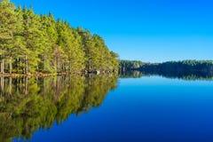 Réflexion de pin sur l'eau calme photo libre de droits