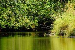 Réflexion de rivière Image stock