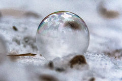 Réflexion de tige d'arbre dans la bulle de savon Photo libre de droits