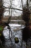 Réflexion des arbres au lac Bolam Image stock