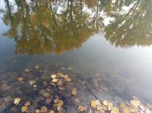 Réflexion des arbres d'automne dans l'eau Des arbres avec les feuilles jaunes sont reflétés dans l'eau Photos stock
