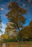 Réflexion des arbres d'automne dans un étang Photographie stock