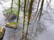 Réflexion des arbres dans l'eau images libres de droits
