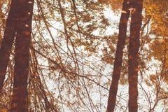 Réflexion des arbres dans l'eau, le fond avec une image retournée d'arbre d'automne avec les feuilles en baisse jaunes, backgr ab Images stock