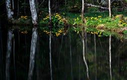 Réflexion des arbres dans la forêt, Ukraine Photos libres de droits