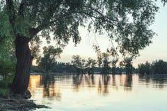 Réflexion des arbres dans le bel étang Photo stock