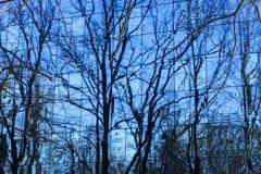 Réflexion des arbres dans un mur de verre Photographie stock